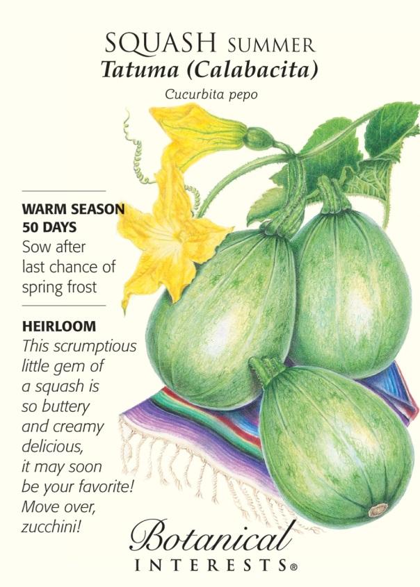 Tatuma Calabacita -- this WILL become your new favorite summer squash.