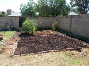 My new (unplanted) garden bed with most of the summer stuff in the far garden bed pulled -- except for the giant okra bushes.